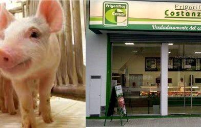 El cerdo como motor económico Gilense